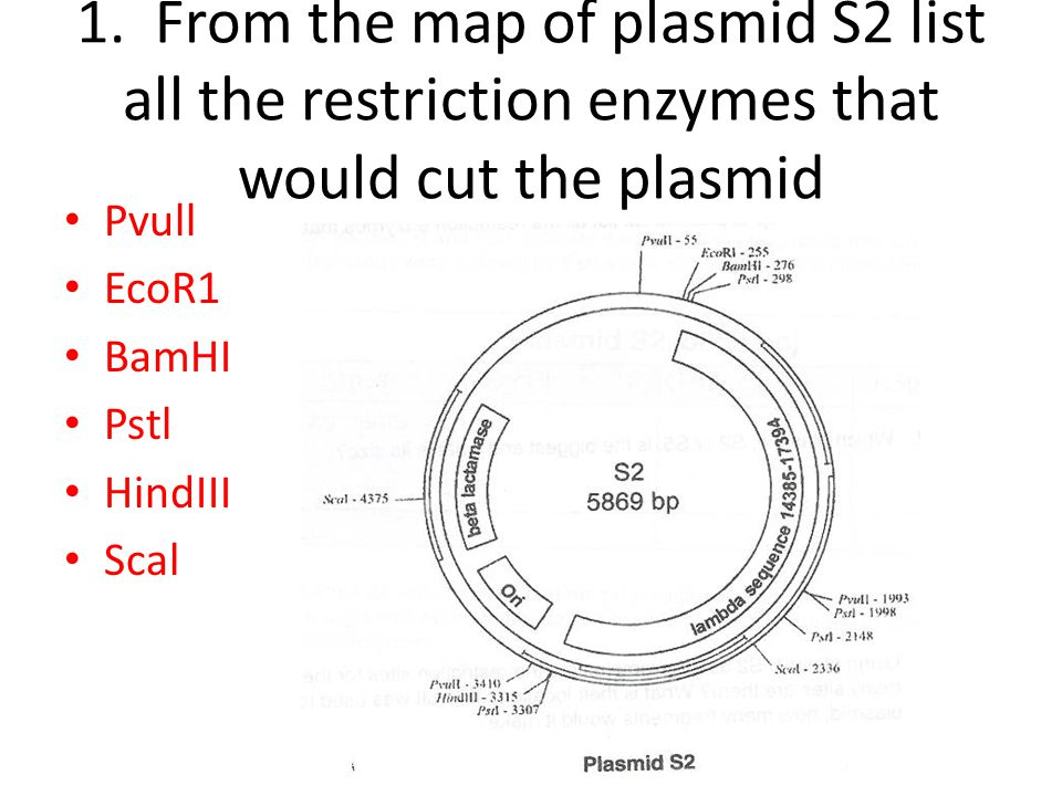 Plasmids and Restriction Enzyme Mapping - ppt video online download