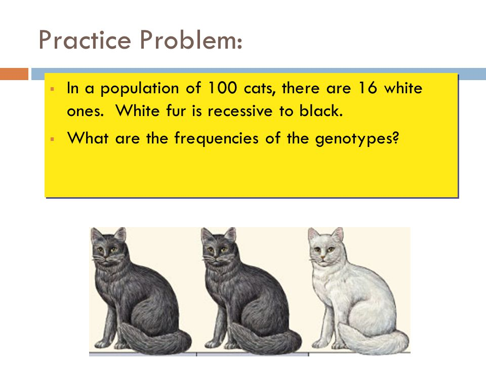 Practice Problem: In a population of 100 cats, there are 16 white ones. White fur is recessive to black.