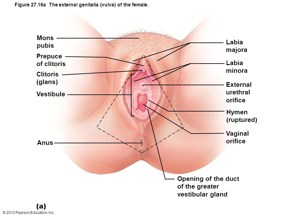 Enlarged Clitoris