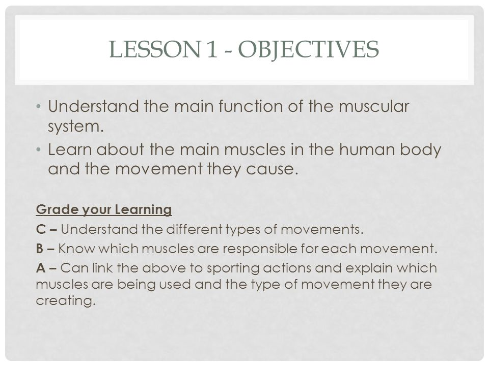 Topic The Muscular System Ppt Download