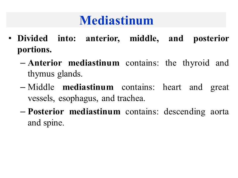 Mediastinum Divided into: anterior, middle, and posterior portions.
