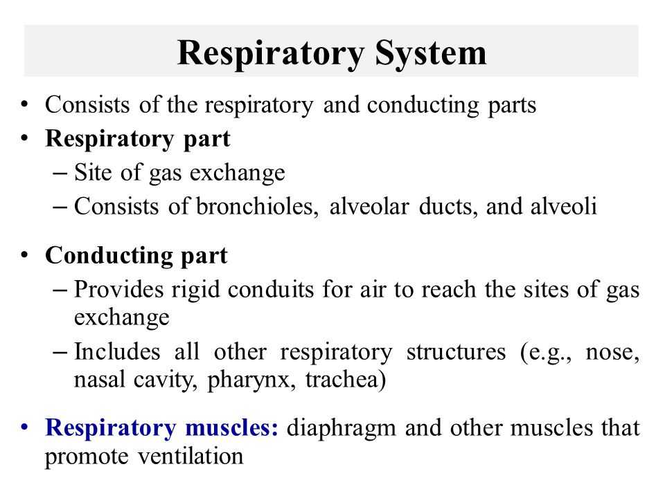 Respiratory System Consists of the respiratory and conducting parts