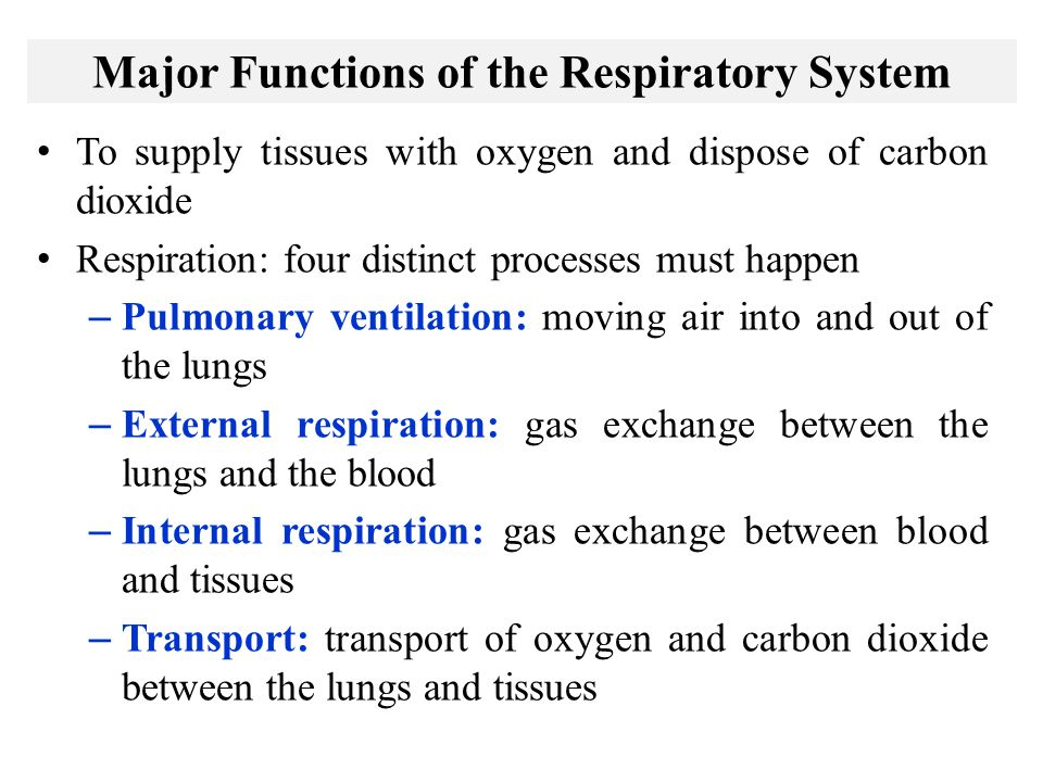 Major Functions of the Respiratory System