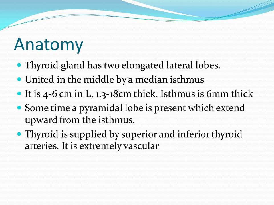 Anatomy Thyroid gland has two elongated lateral lobes.