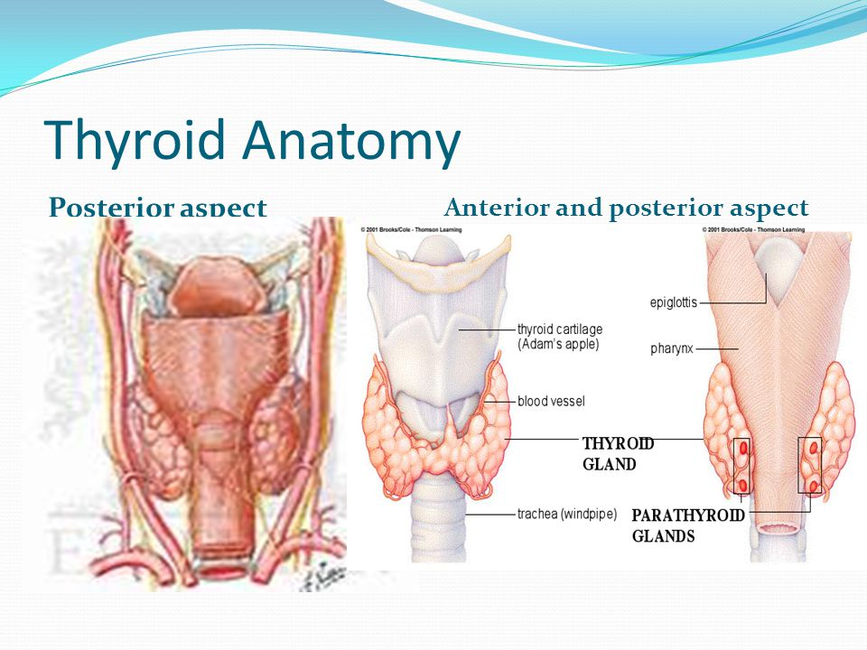 Radiology of Thyroid and parathyroid - ppt video online download