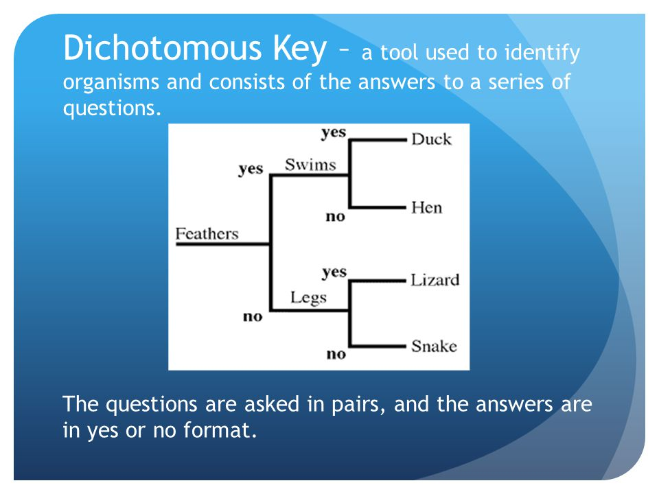 Dichotomous Key – a tool used to identify organisms and consists of the answers to a series of questions.
