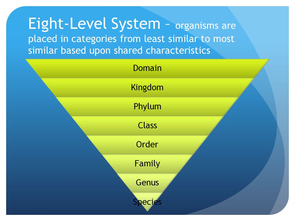 Eight-Level System – organisms are placed in categories from least similar to most similar based upon shared characteristics