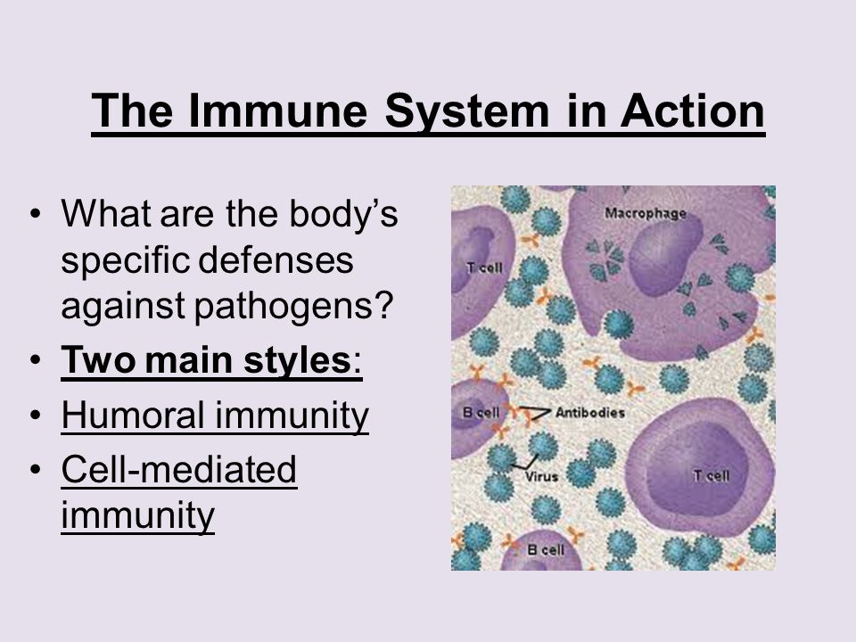 The Immune System in Action