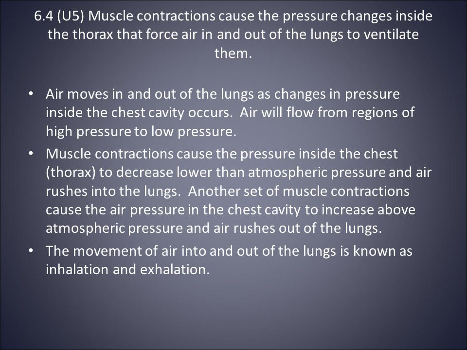 6.4 (U5) Muscle contractions cause the pressure changes inside the thorax that force air in and out of the lungs to ventilate them.