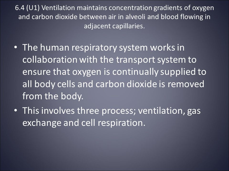 6.4 (U1) Ventilation maintains concentration gradients of oxygen and carbon dioxide between air in alveoli and blood flowing in adjacent capillaries.