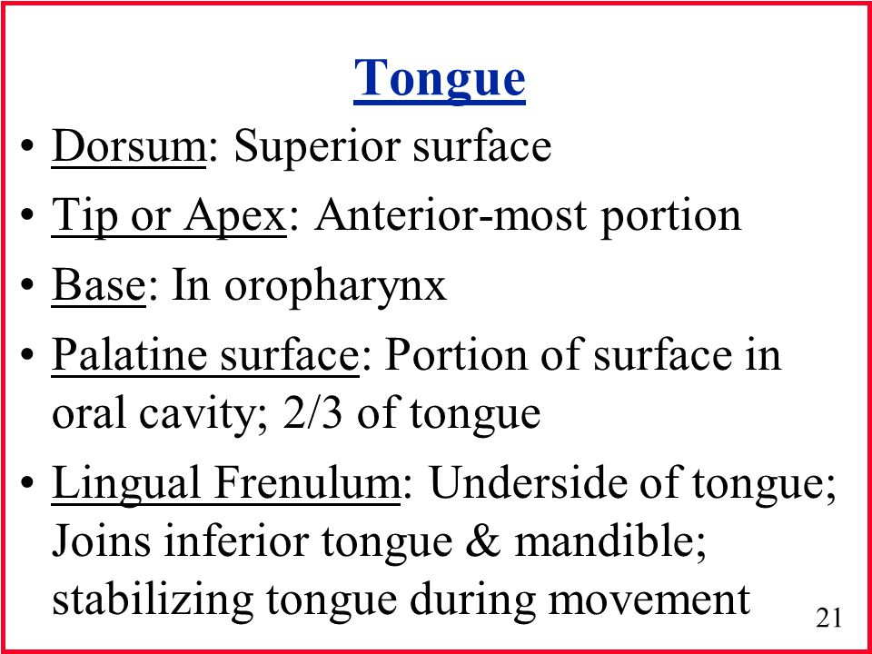 Supralaryngeal Anatomy - ppt video online download