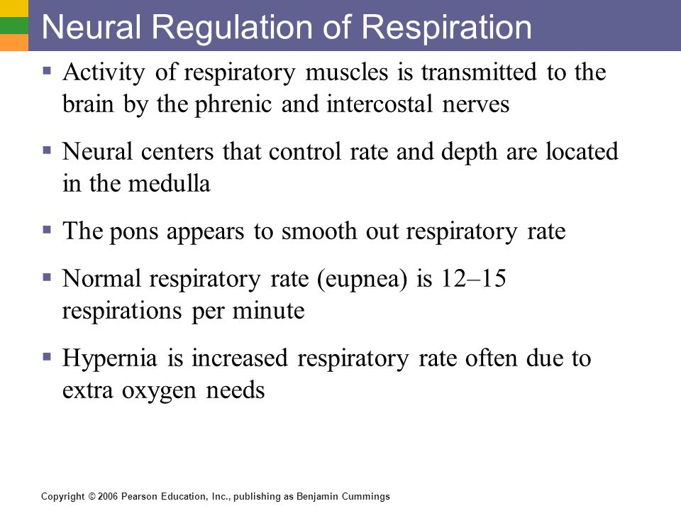 Neural Regulation of Respiration