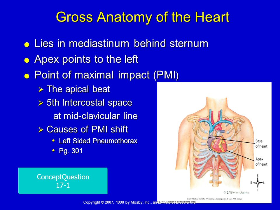 Lecture Notes Functional Anatomy of the Cardiovascular System - ppt ...