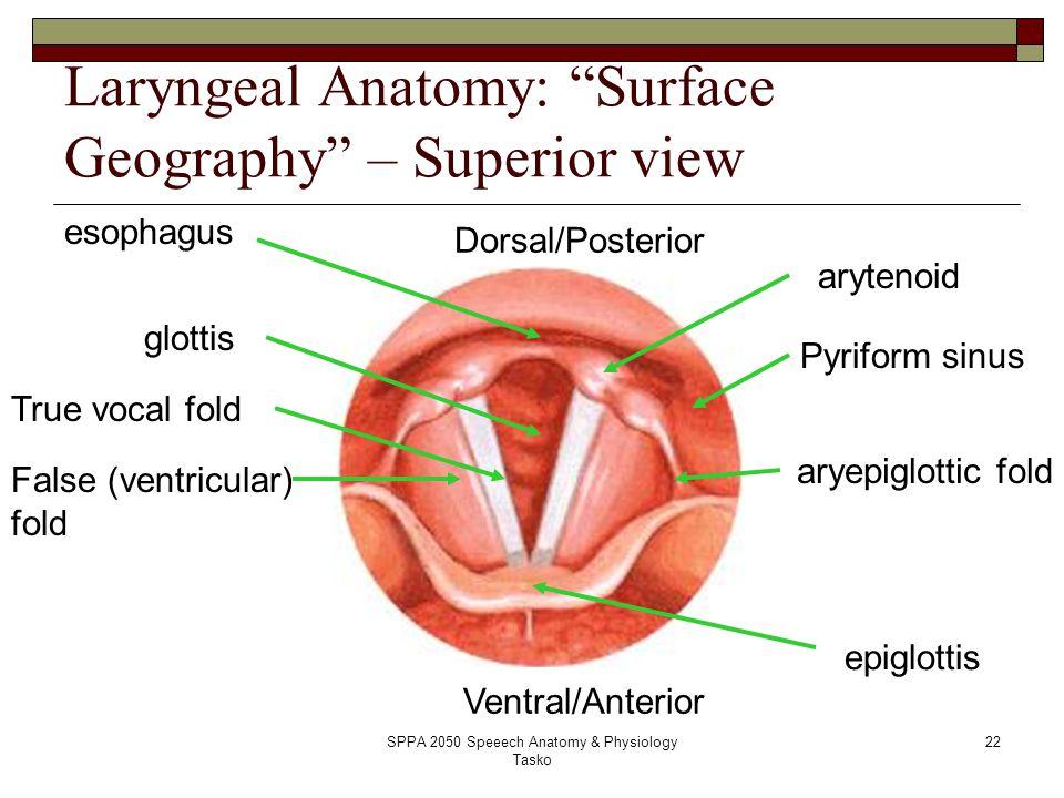 SPPA 2050 Speeech Anatomy & Physiology Tasko - ppt video online download