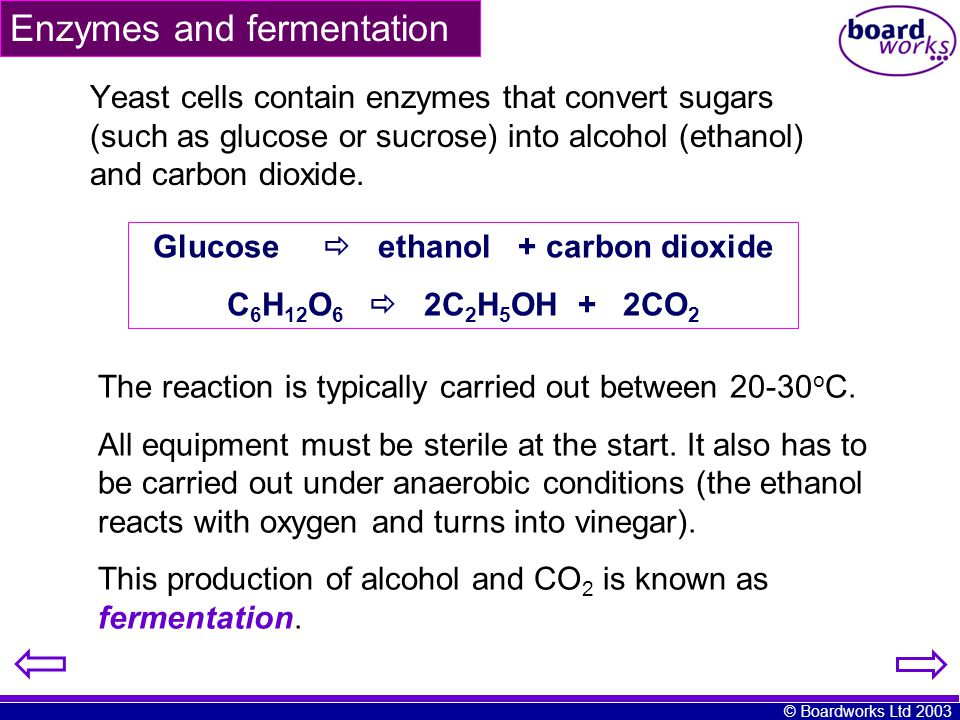 Enzymes and fermentation