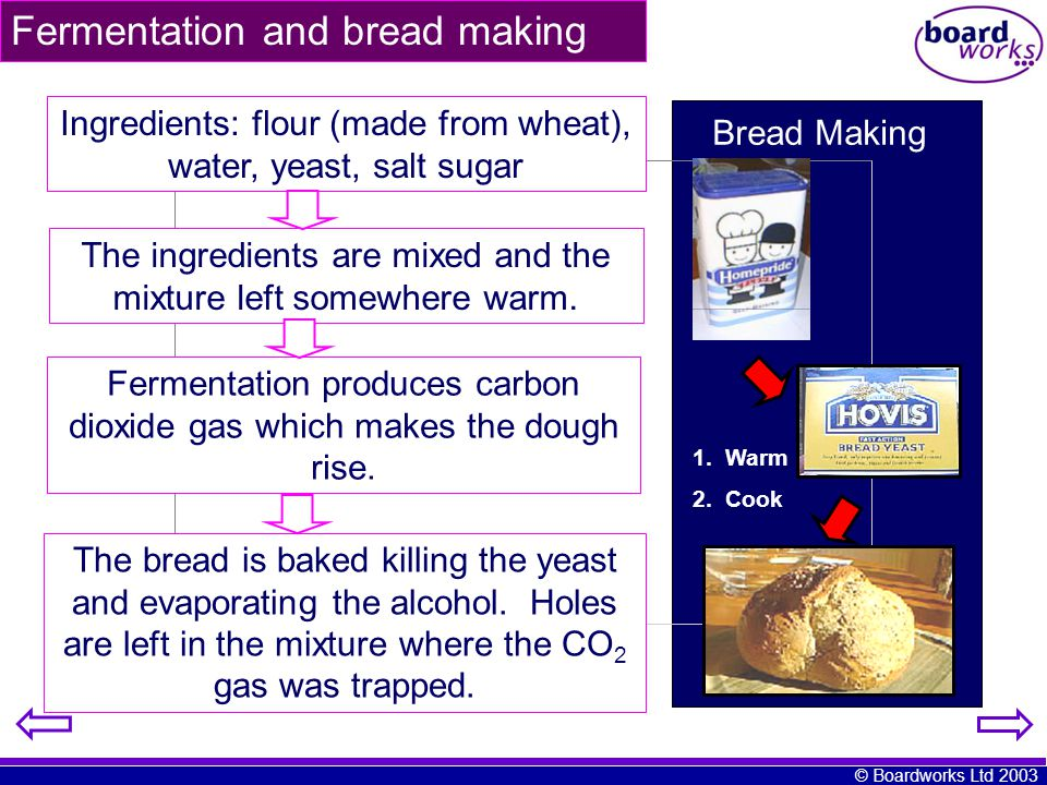 Fermentation and bread making