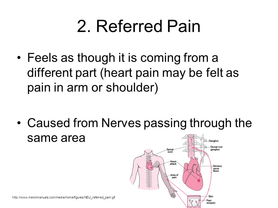 2. Referred Pain Feels as though it is coming from a different part (heart pain may be felt as pain in arm or shoulder)