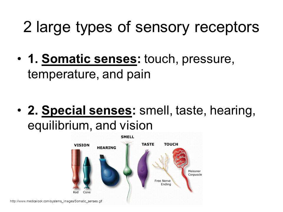 2 large types of sensory receptors