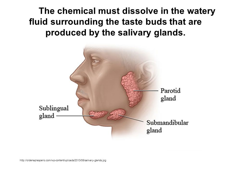 The chemical must dissolve in the watery fluid surrounding the taste buds that are produced by the salivary glands.