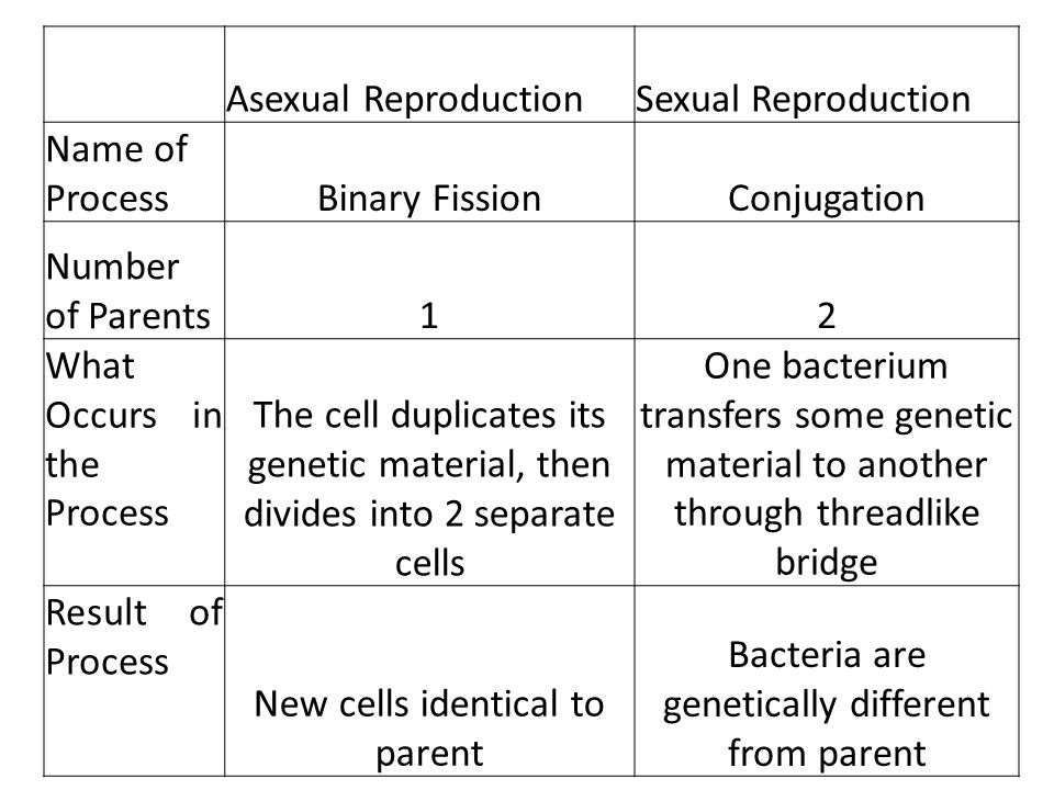 Term for asexual reproduction in bacteria occurs