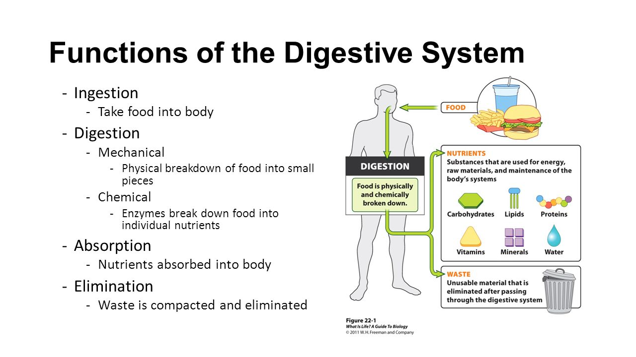 Year 8 Digestive System Lessons Tes Teach