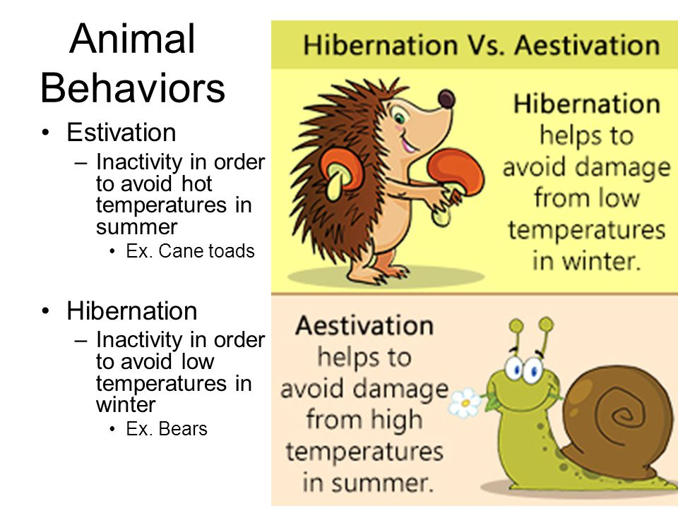 warm up classify each of the following organisms according to the rh slideplayer com summer hibernation chord summer hibernation chord