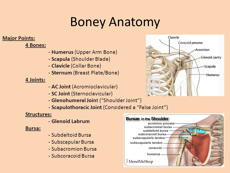 Shoulder Anatomy and Physiology REVIEW - ppt video online download