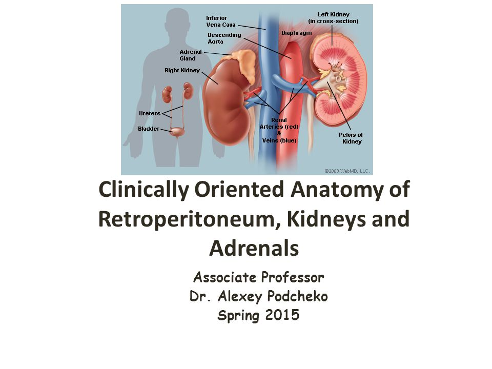 Clinically Oriented Anatomy of Retroperitoneum, Kidneys and