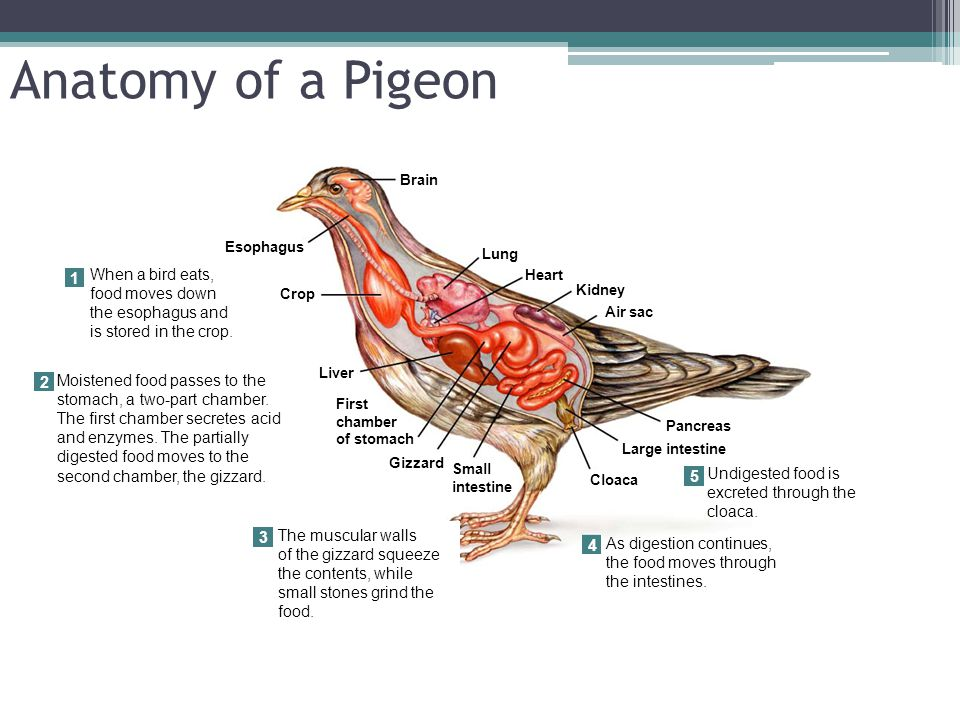 Chapter 31 Reptiles And Birds Mrs Rushing Biology 2 Ppt Video