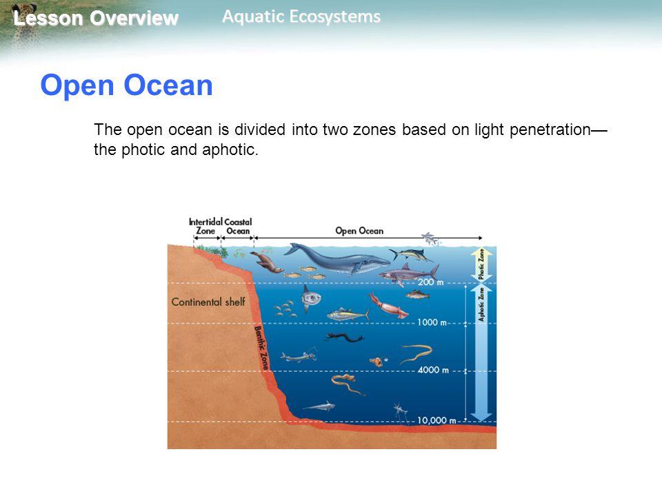 Light penetration open ocean, hot young school sex