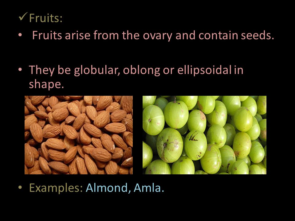 Fruits: Fruits arise from the ovary and contain seeds. They be globular, oblong or ellipsoidal in shape.