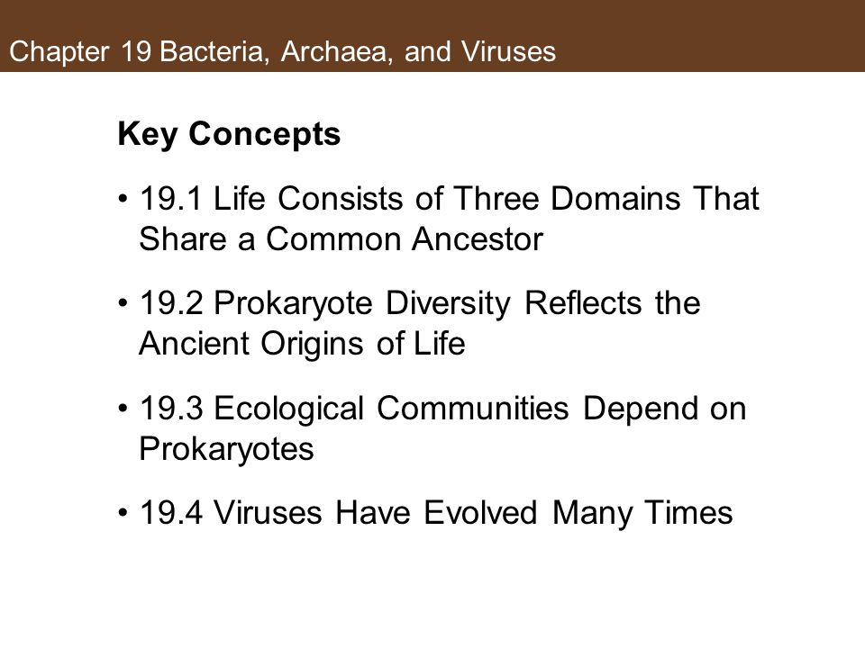 Bacteria, Archaea, and Viruses - ppt download
