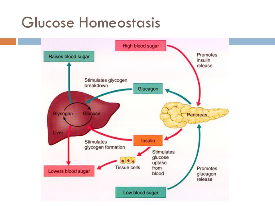 Sugar Homeostasis Diagram Reinvent Your Wiring Diagram