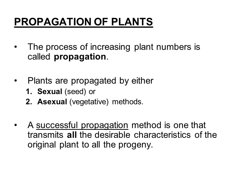 Steps of sexual propagation in plants