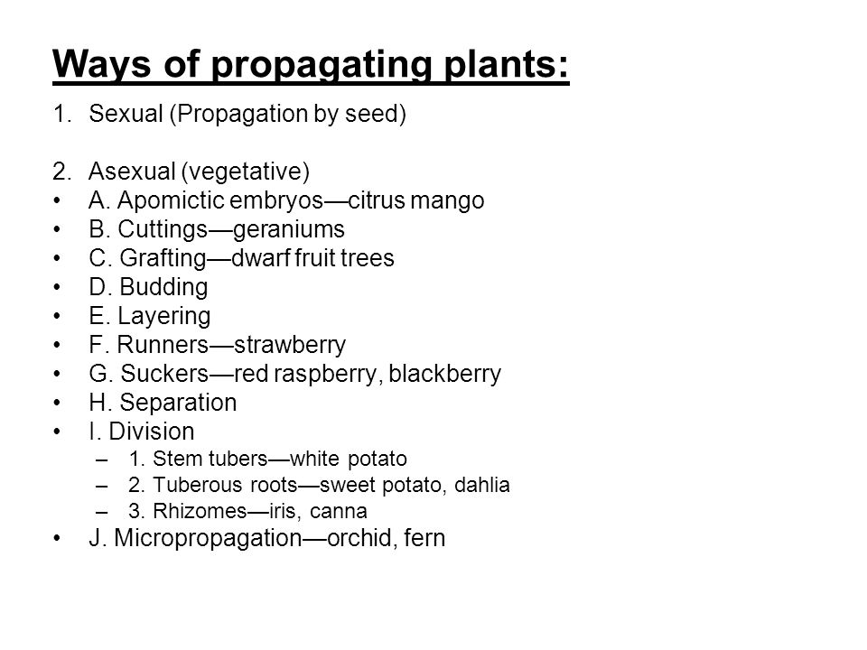 3 ways of propagating plants asexually