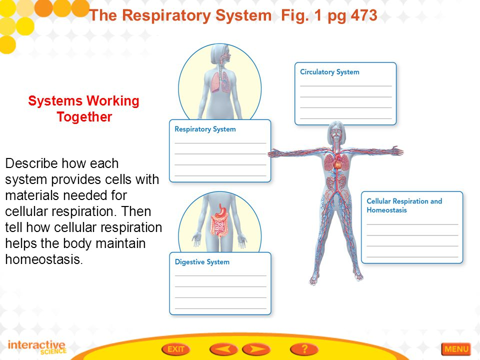 Managing materials in the body the respiratory system ppt video systems working together ccuart Gallery