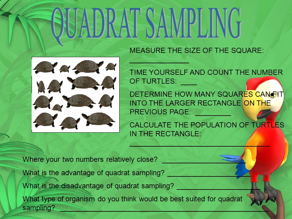 QUADRAT SAMPLING MEASURE THE SIZE OF THE SQUARE: _______________