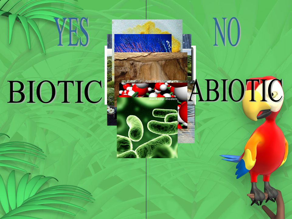 YES NO BIOTIC ABIOTIC