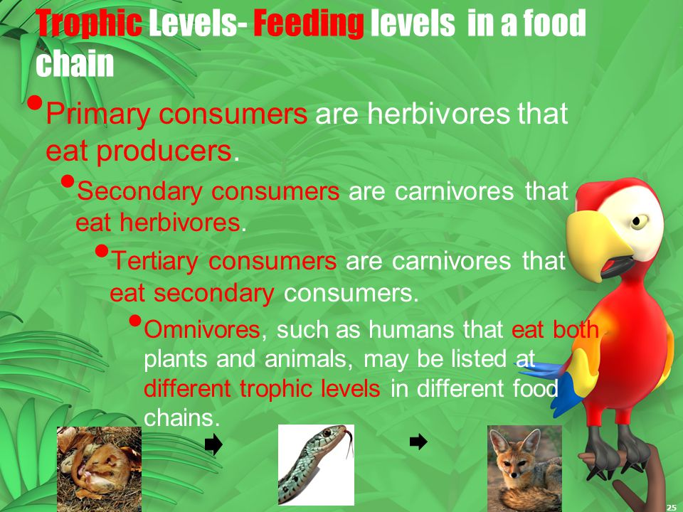 Trophic Levels- Feeding levels in a food chain