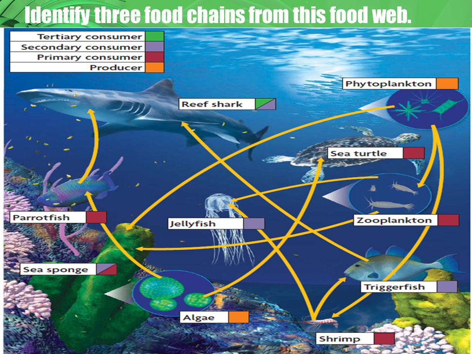 Identify three food chains from this food web.