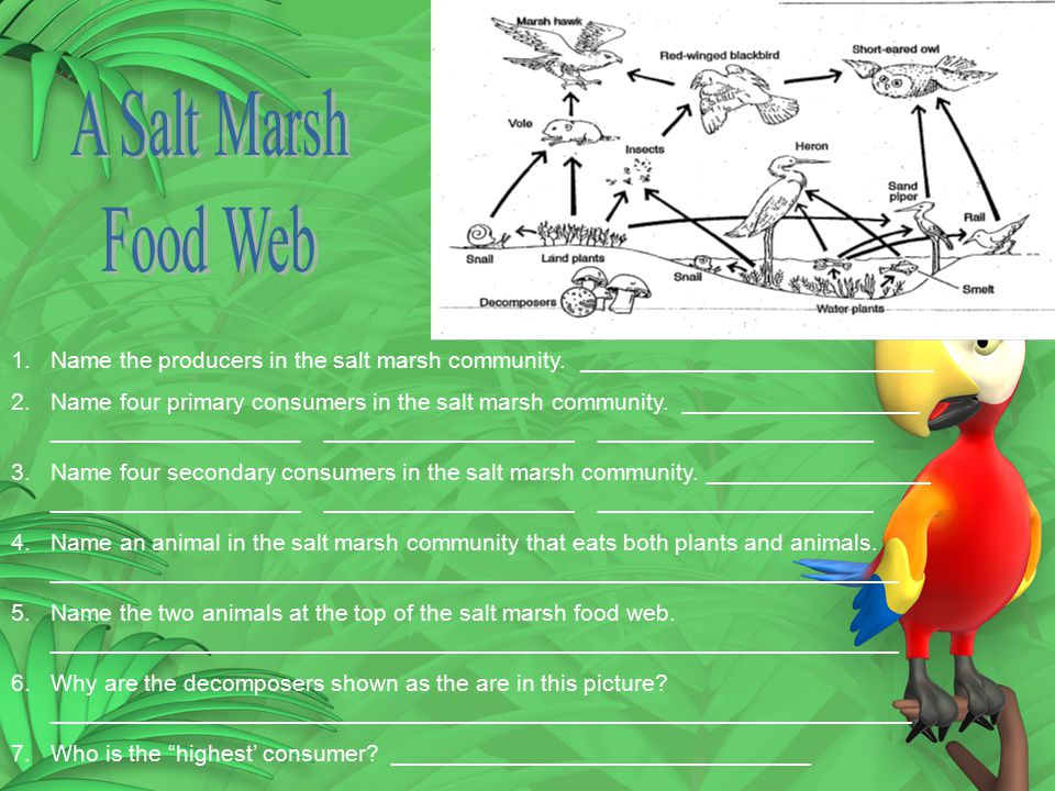 A Salt Marsh Food Web. Name the producers in the salt marsh community. ___________________________.
