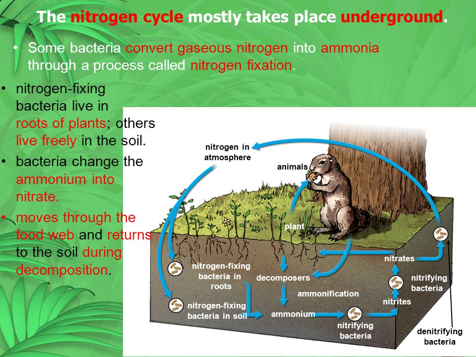 The nitrogen cycle mostly takes place underground.
