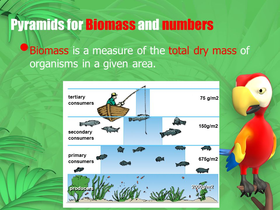 Pyramids for Biomass and numbers