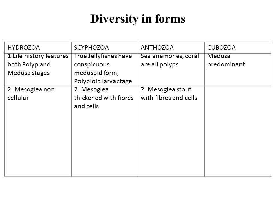 56 Diversity In Forms HYDROZOA 1