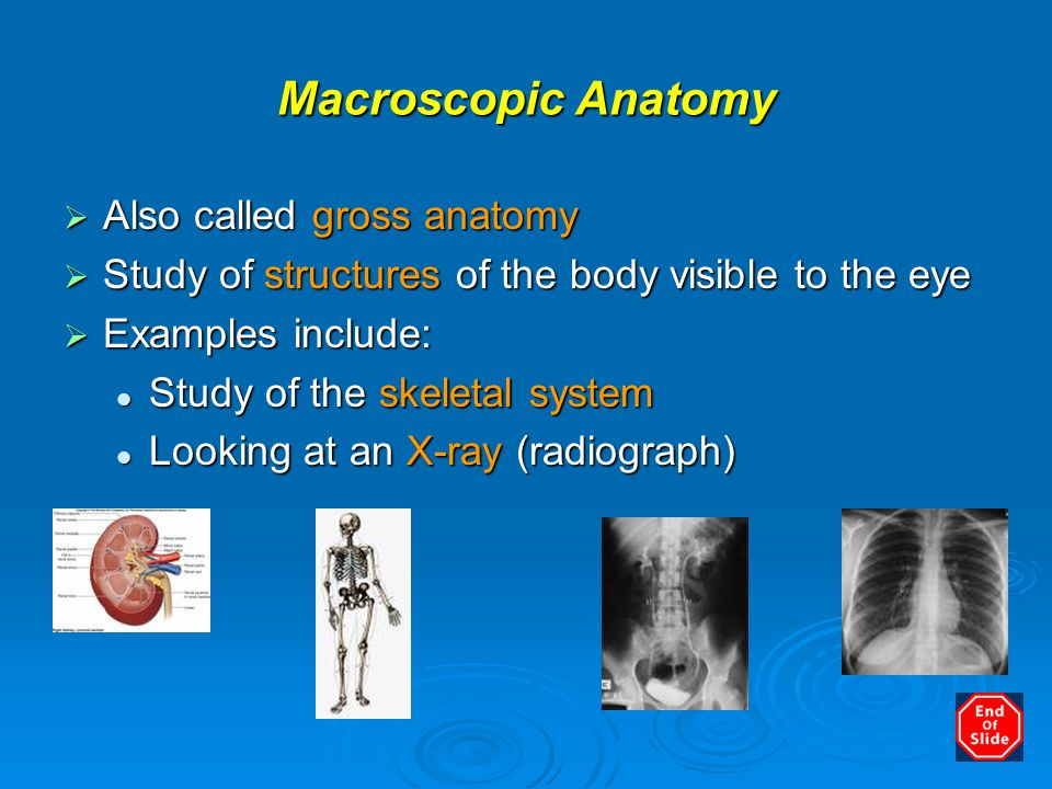 Anatomy, Physiology and Disease - ppt video online download