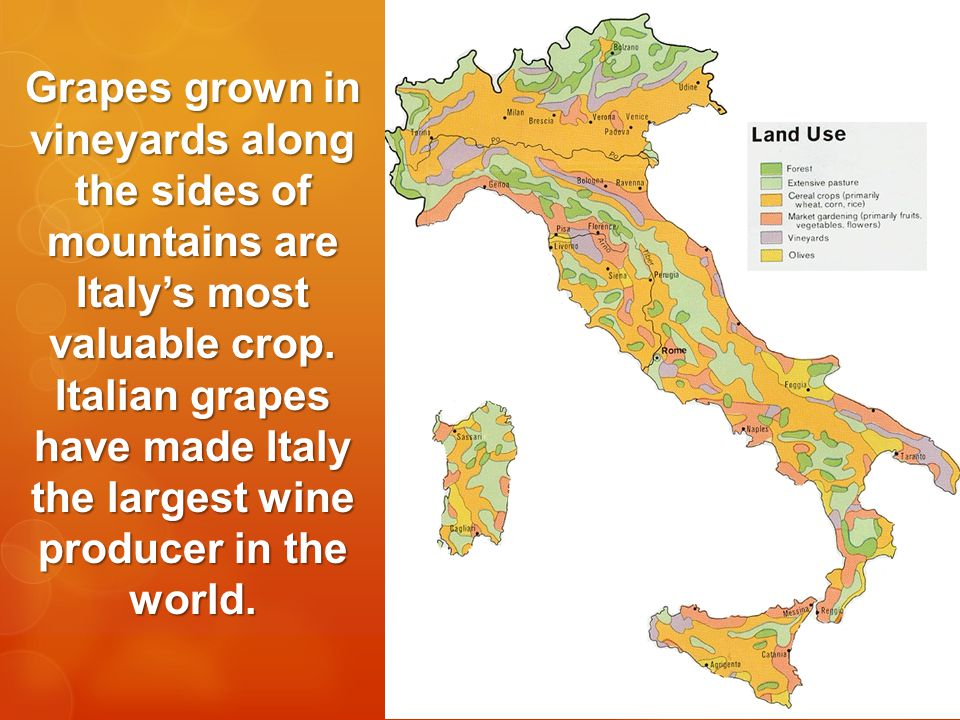 Grapes grown in vineyards along the sides of mountains are Italy's most valuable crop.