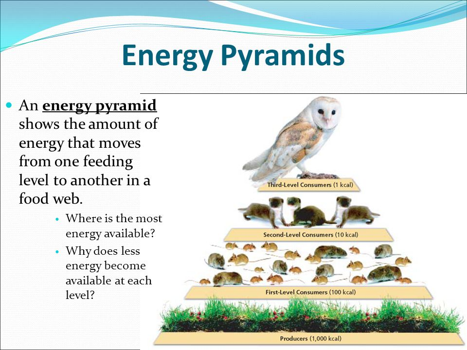 How Does The Energy In Food Become Available To Organisms
