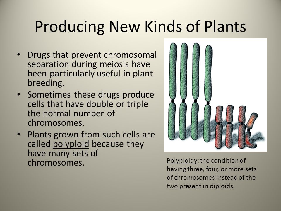 Producing New Kinds of Plants