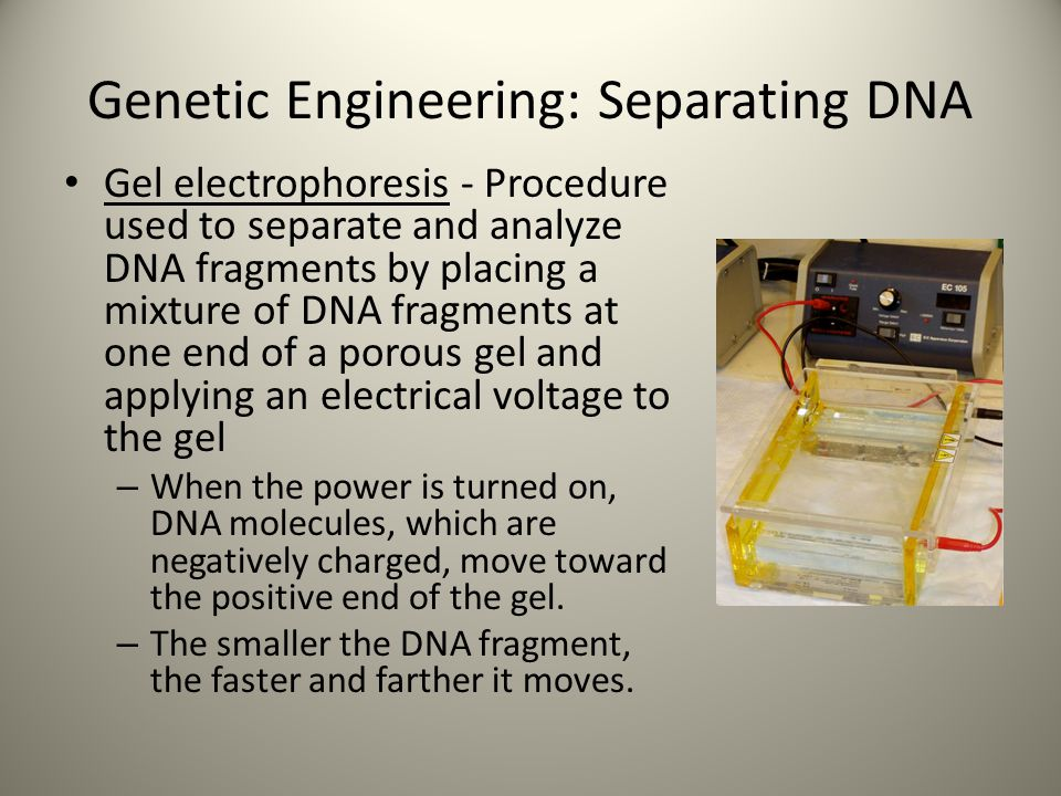 Genetic Engineering: Separating DNA