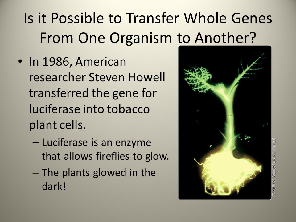 Is it Possible to Transfer Whole Genes From One Organism to Another
